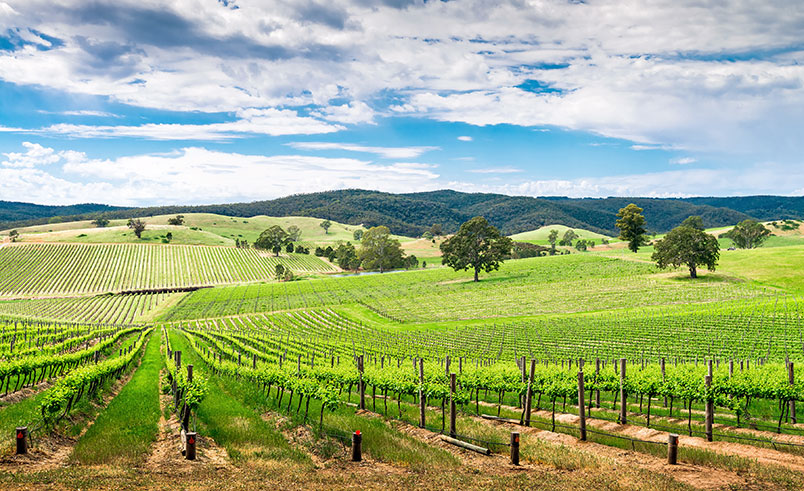 Wine valley in Barossa, Australia